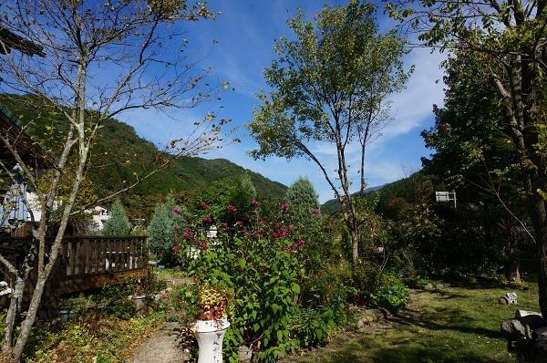 今日のお庭_e0365880_20485238.jpg