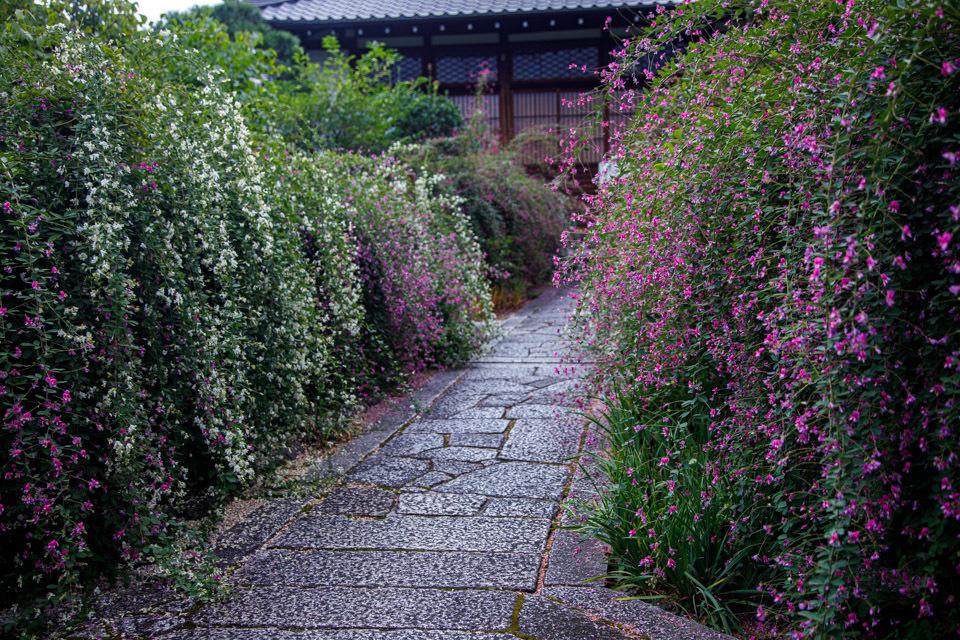 萩!  ~常林寺~_b0128581_20191425.jpg