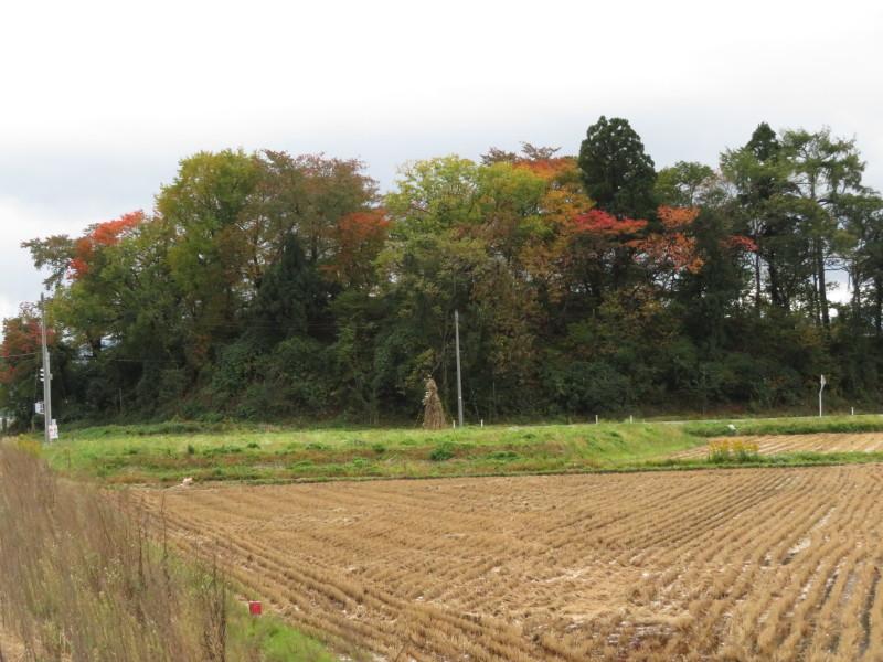 秋も深まって・・・_e0359282_09543645.jpg