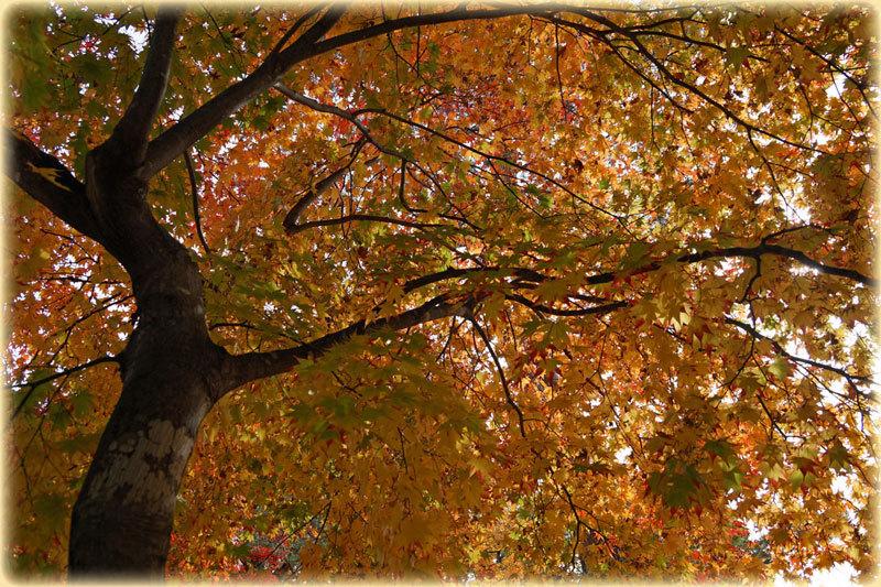 紅葉の季節_d0162994_08482175.jpg