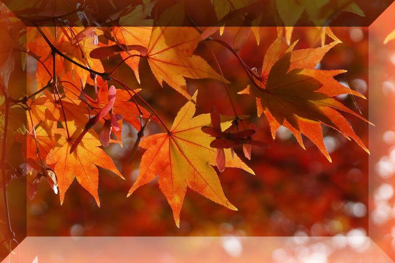 紅葉の季節_d0162994_08484077.jpg