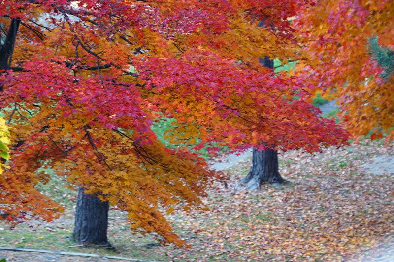 紅葉の季節_d0162994_08485840.jpg