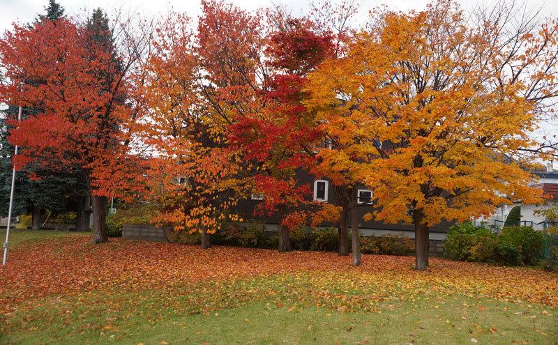 紅葉の季節_d0162994_08544492.jpg