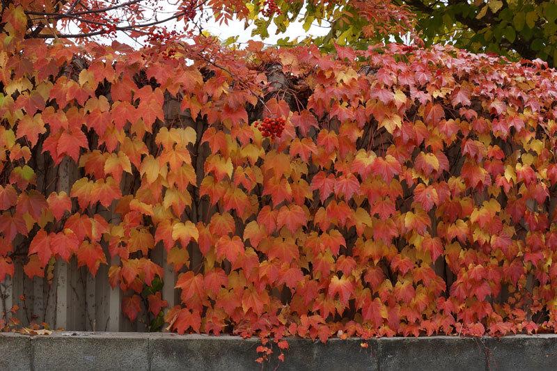 紅葉の季節_d0162994_08552780.jpg