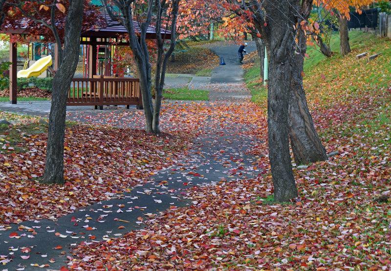 紅葉の季節_d0162994_08555093.jpg