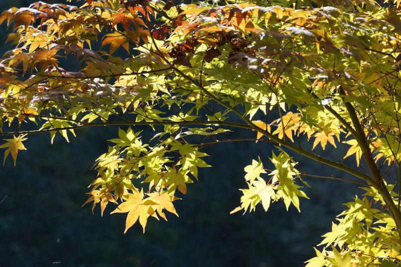 紅葉の季節_d0162994_09045727.jpg