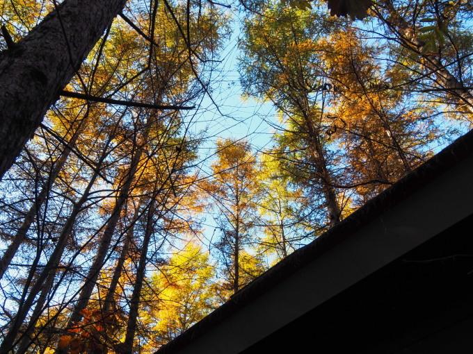 ここは森が輝く絶景スポット・・カラマツの紅葉が見頃となって来ました。_f0276498_20422124.jpg