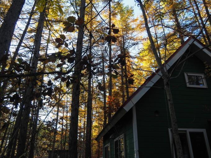 ここは森が輝く絶景スポット・・カラマツの紅葉が見頃となって来ました。_f0276498_20444409.jpg