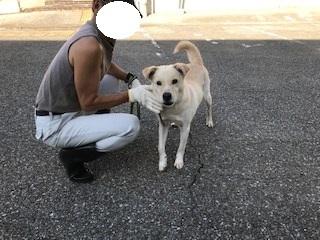 【犬・移動先募集】センター(支所)収容(10/28訪問)_f0242002_16572081.jpg