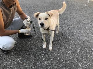 【犬・移動先募集】センター(支所)収容(10/28訪問)_f0242002_16572946.jpg