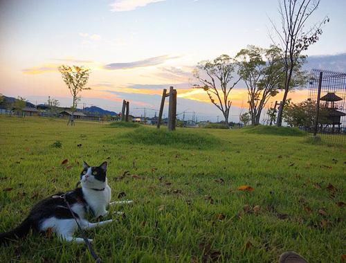 自然と歴史豊かな、唐古・鍵遺跡公園。〜 奈良 田原本町 〜_d0077603_12034876.jpg