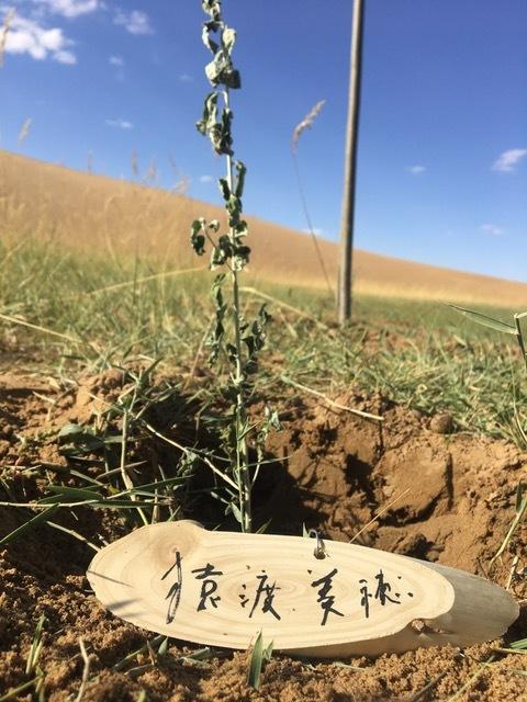 ウランブハ砂漠にスナナツメを植えていただきました!!_c0180209_00490607.jpeg