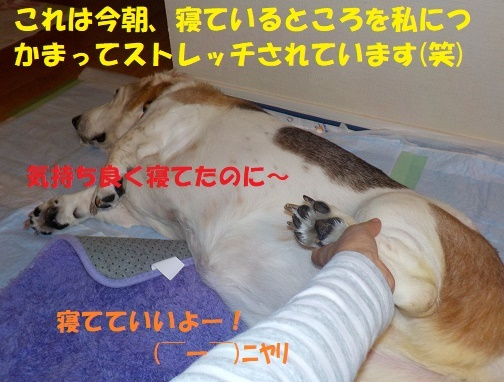 f0121712_16005831.jpg
