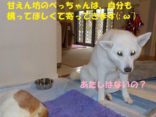 f0121712_16054437.jpg
