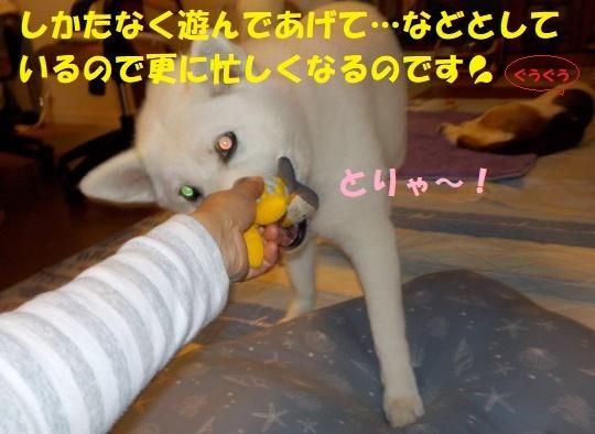 f0121712_16100239.jpg