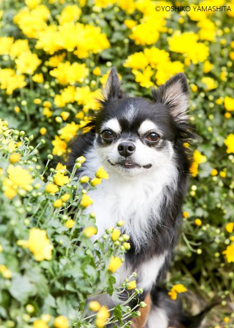 お花に囲まれて♪_f0031022_06523589.jpg