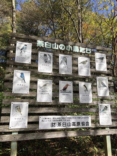 【レッスン見本】マンスリークロスステッチ・2色刺しver.(10月分)_e0204334_15501557.jpg