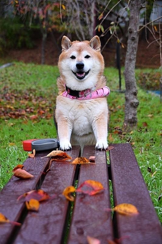 秋が深まってきました_b0314043_08361519.jpg
