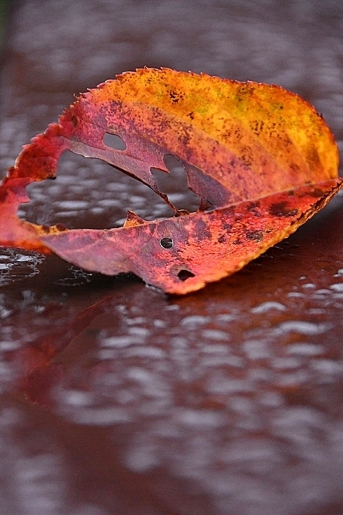 秋が深まってきました_b0314043_08364234.jpg