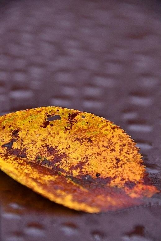 秋が深まってきました_b0314043_08365964.jpg