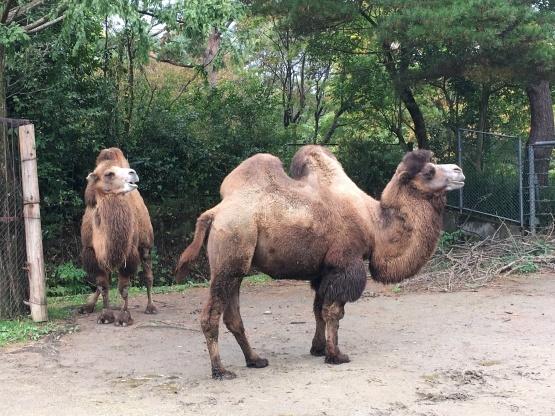 10月24日(木)八木山動物園1_b0206845_10284385.jpeg