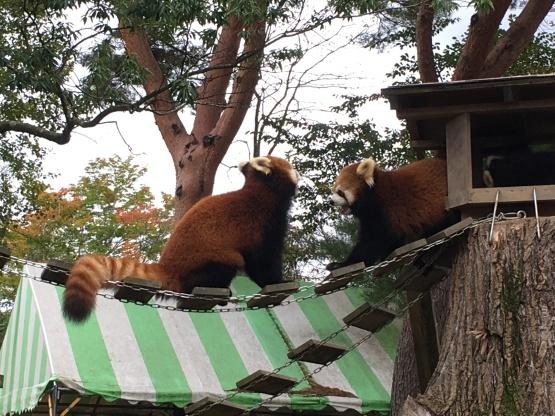 10月24日(木)八木山動物園1_b0206845_10285293.jpeg