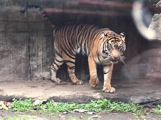 10月24日(木)八木山動物園1_b0206845_10300180.jpeg