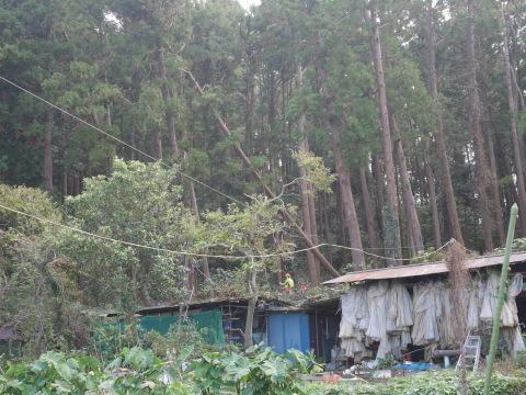 懸案の畑上のスギの架かり木など伐採:10:28六国見山手入れ⓵_c0014967_10211932.jpg