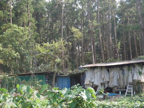 懸案の畑上のスギの架かり木など伐採:10:28六国見山手入れ⓵_c0014967_10215202.jpg
