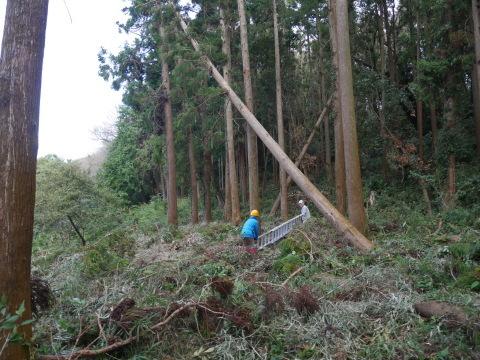 懸案の畑上のスギの架かり木など伐採:10:28六国見山手入れ⓵_c0014967_10241490.jpg