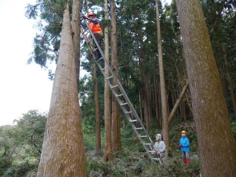 懸案の畑上のスギの架かり木など伐採:10:28六国見山手入れ⓵_c0014967_10252808.jpg