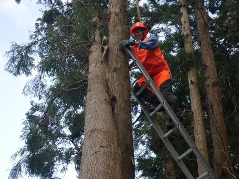 懸案の畑上のスギの架かり木など伐採:10:28六国見山手入れ⓵_c0014967_10254164.jpg