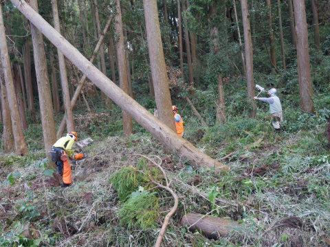 懸案の畑上のスギの架かり木など伐採:10:28六国見山手入れ⓵_c0014967_10255574.jpg