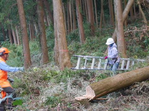 懸案の畑上のスギの架かり木など伐採:10:28六国見山手入れ⓵_c0014967_10263639.jpg