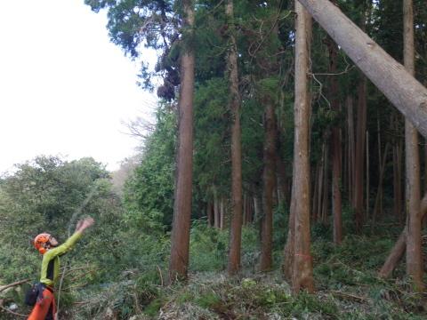 懸案の畑上のスギの架かり木など伐採:10:28六国見山手入れ⓵_c0014967_10272812.jpg