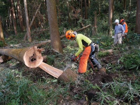 懸案の畑上のスギの架かり木など伐採:10:28六国見山手入れ⓵_c0014967_10282432.jpg