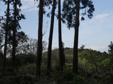 懸案の畑上のスギの架かり木など伐採:10:28六国見山手入れ⓵_c0014967_10301832.jpg