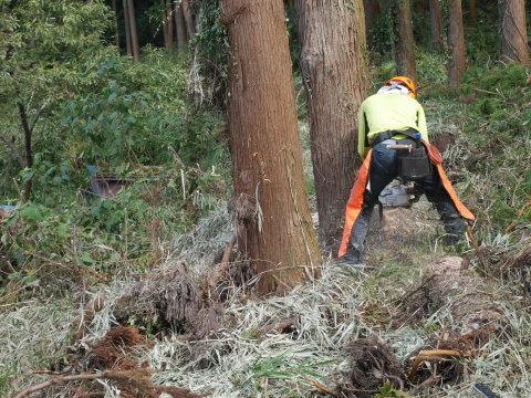 懸案の畑上のスギの架かり木など伐採:10:28六国見山手入れ⓵_c0014967_10304633.jpg