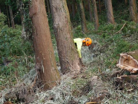 懸案の畑上のスギの架かり木など伐採:10:28六国見山手入れ⓵_c0014967_10310177.jpg