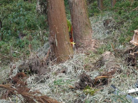 懸案の畑上のスギの架かり木など伐採:10:28六国見山手入れ⓵_c0014967_10311577.jpg