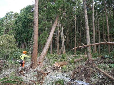 懸案の畑上のスギの架かり木など伐採:10:28六国見山手入れ⓵_c0014967_10313172.jpg