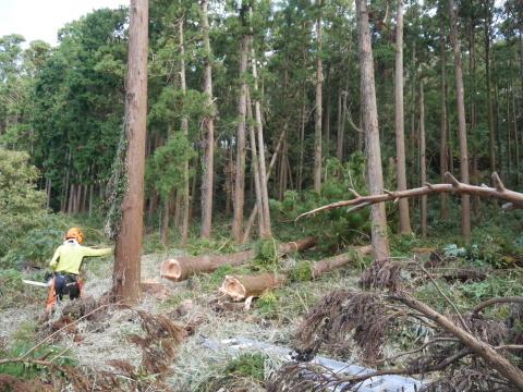 懸案の畑上のスギの架かり木など伐採:10:28六国見山手入れ⓵_c0014967_10314498.jpg
