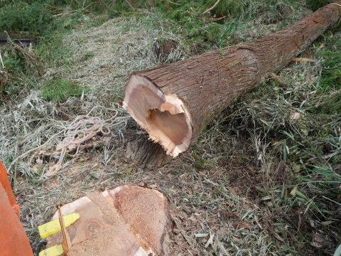 懸案の畑上のスギの架かり木など伐採:10:28六国見山手入れ⓵_c0014967_10320877.jpg