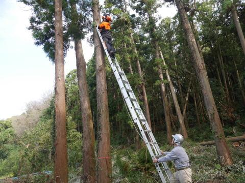 懸案の畑上のスギの架かり木など伐採:10:28六国見山手入れ⓵_c0014967_10340591.jpg