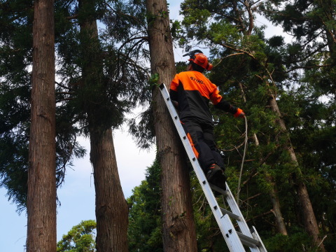 懸案の畑上のスギの架かり木など伐採:10:28六国見山手入れ⓵_c0014967_10361643.jpg