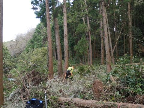 懸案の畑上のスギの架かり木など伐採:10:28六国見山手入れ⓵_c0014967_10363777.jpg