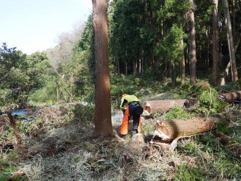 懸案の畑上のスギの架かり木など伐採:10:28六国見山手入れ⓵_c0014967_10373703.jpg