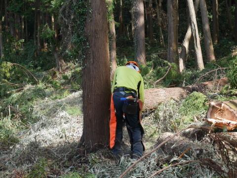 懸案の畑上のスギの架かり木など伐採:10:28六国見山手入れ⓵_c0014967_10375024.jpg