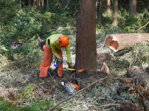 懸案の畑上のスギの架かり木など伐採:10:28六国見山手入れ⓵_c0014967_10380908.jpg