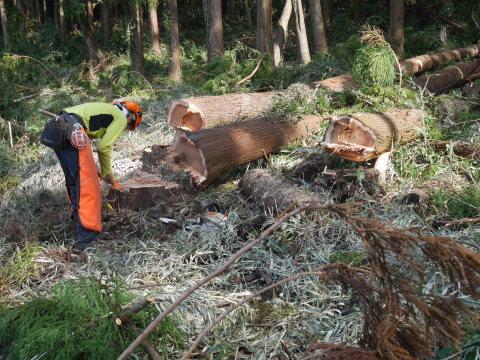 懸案の畑上のスギの架かり木など伐採:10:28六国見山手入れ⓵_c0014967_10390066.jpg